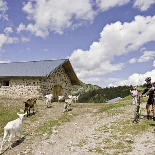 Mountain Bike Madonna di Campiglio