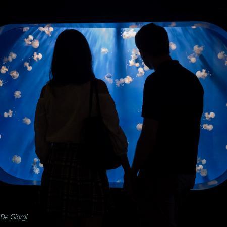 Visita l'Acquario di Genova, il più grande d'Europa
