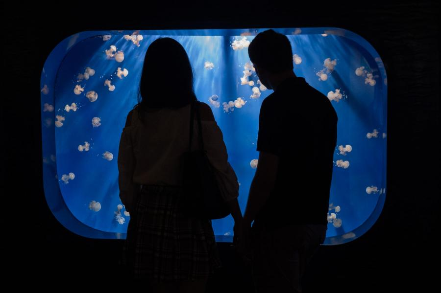At Easter give the Aquarium of Genoa, the largest in Europe