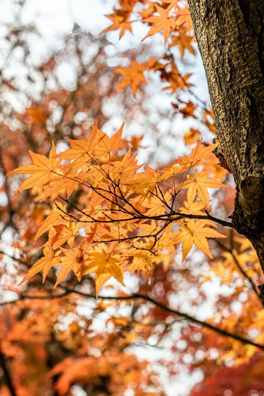 Offerte autunno nel Primiero
