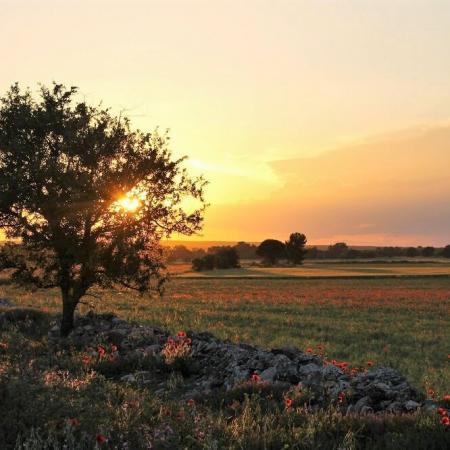 Offerte d'autunno nella Valle d'Itria