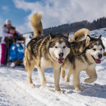 Offers for the Husky Village near Livigno
