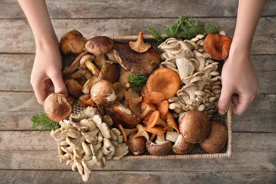 Offerta raccolta funghi in Trentino